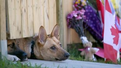 Gli occhi tristi dei cani del soldato Cirillo commuovono il mondo:  la fotogalleria