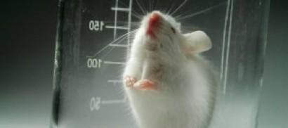 Tumore ovarico, creati  35 modelli umani sui topi