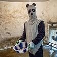 Scienziati in maschera per studiare gli animali