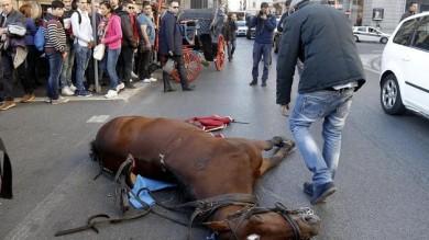 Botticelle a Roma, cavallo  scivola e cade in via del Corso