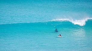 Il sangue freddo del surfista Sull'onda con lo squalo