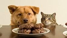I falsi miti sul cibo per cani e gatti  di P. MATTEUCCI