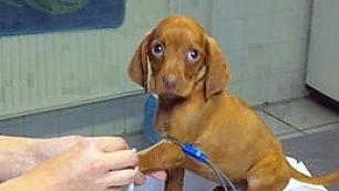 Panico da veterinario Lo raccontano gli occhi