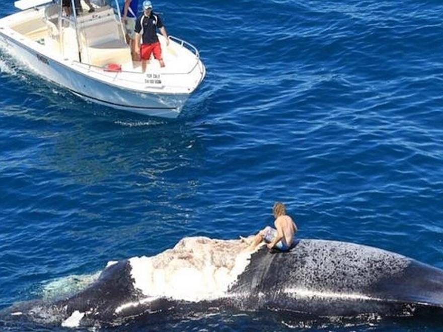 Surf sulla carcassa della balena: i social lo inchiodano