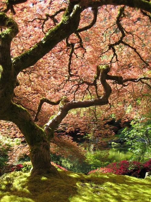 Angoli zen in citt i giardini giapponesi nel mondo for Giardini giapponesi