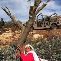 Turchia, aggrediti per aver difeso gli alberi