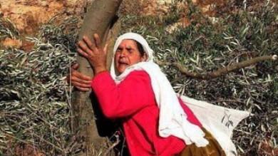 Soma, battaglia per gli ulivi: 6 mila già abbattuti per fare una centrale  foto