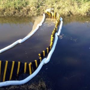 Disastro ecologico a Maccarese, animali e uccelli morti nel fiume Arrone
