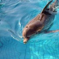 """Onu: """"Delfini e balene, stop alla cattura"""". Svolta storica"""