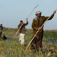 """Iraq, Fao: """"Servono 38,5 milioni per salvare l'agricoltura"""""""