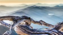 Fragile bellezza nelle grandi foto per i desktop