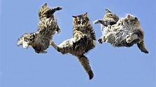 Ultime Notizie: Come cadere bene? I robot lo imparano dai gatti