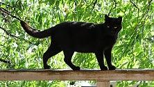 """Per la difesa dei felini c'è il """"Gatto nero day"""""""