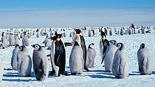 Il caso shock dei pinguini violentati dai leoni marini