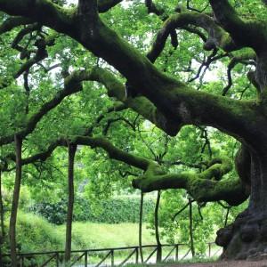 """""""Belli e preziosi, ecco perché dobbiamo festeggiare gli alberi"""""""