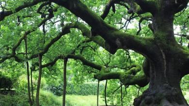 """Fratus, il cantore degli alberi -   Foto   """"Belli e preziosi, tutti da festeggiare"""""""