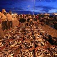"""Greenpeace: """"Fermiamo la pesca eccessiva: danneggia i mari e i piccoli pescatori"""""""