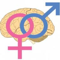 Uomini e donne, cervelli diversi ma tanto uguali. Lo dice la scienza