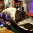 Ecco il super cannolo Lungo 5 metri, pesa 230 kg
