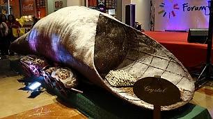 Ecco il super cannolo Lungo 5 metri, pesa 230 chili
