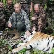 Cina, razzia di capre Tigri di Putin sotto accusa