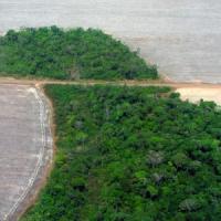 Amazzonia, secondo il governo brasiliano la deforestazione rallenta. Ma la Ong non è...