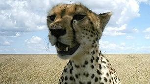 La vita nel Serengeti svelata dalle fototrappole