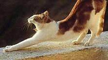 Perché il gatto non sarà mai un animale domestico   di RAZIR KHAN