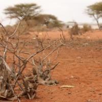 Clima, il Sud Italia potrebbe diventare come l'Africa