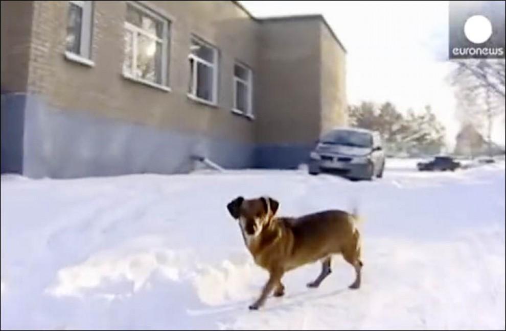 Siberia, la devozione della bassottina: aspetta il padrone morto da un anno