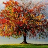 2014: anno del caldo record, natura in tilt
