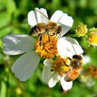 La supervista delle api aiuterà l'intelligenza artificiale