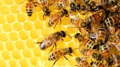La supervista delle api da miele aiuterà l'intelligenza artificiale