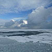 """Scoperta """"cozza"""" nascosta per 2 mln di anni nel mare Artico"""