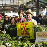 Via libera degli Stati Ue a divieti nazionali a coltivazione di Ogm