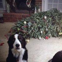 Un Natale da cani: disastri sotto l'albero