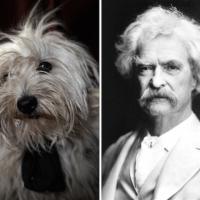 Cani-scrittori cercano casa: una somiglianza per un'adozione