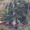Sbadigli: gli orsi  si preparano   al letargo