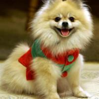 Natale animale: come ti addobbo (teneramente) il cucciolo
