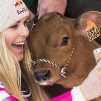 Lindsey Vonn, si fa il selfie con il vitellino in Val-d'Isère