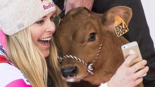 La bella e la bestiola Lindsey Vonn, selfie con vitellino