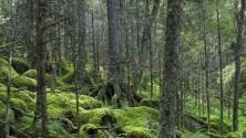 Il clima che cambia uccide gli alberi in Europa