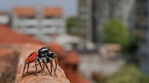 ''Vado a vivere in città'' gheppi, ragni e aironi urbani