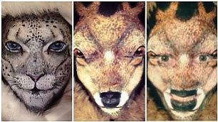 Guarda bene, questa è una donna Make-up magico: lo zoo è sul volto