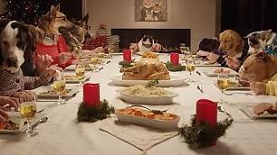La cena speciale di cani e gatti a tavola sembrano esseri umani