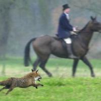 Inghilterra, in 250mila all'apertura della caccia alla volpe