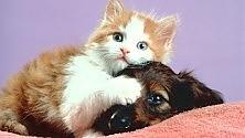 Oroscopo, anche cani e gatti guardano le stelle