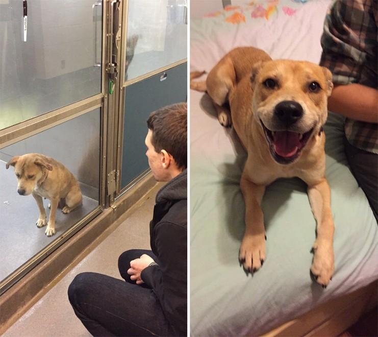 Prima e dopo l'adozione: la nuova vita felice di cani e gatti
