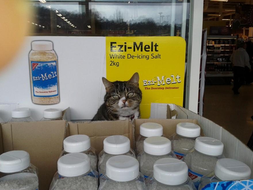 Ecco Mango, il gatto che vive in un supermercato