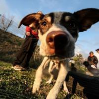 Imparare giocando, a Napoli l'asilo nido per i cuccioli
